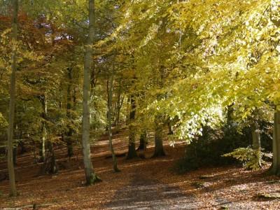 Whiteleaf Woods 1