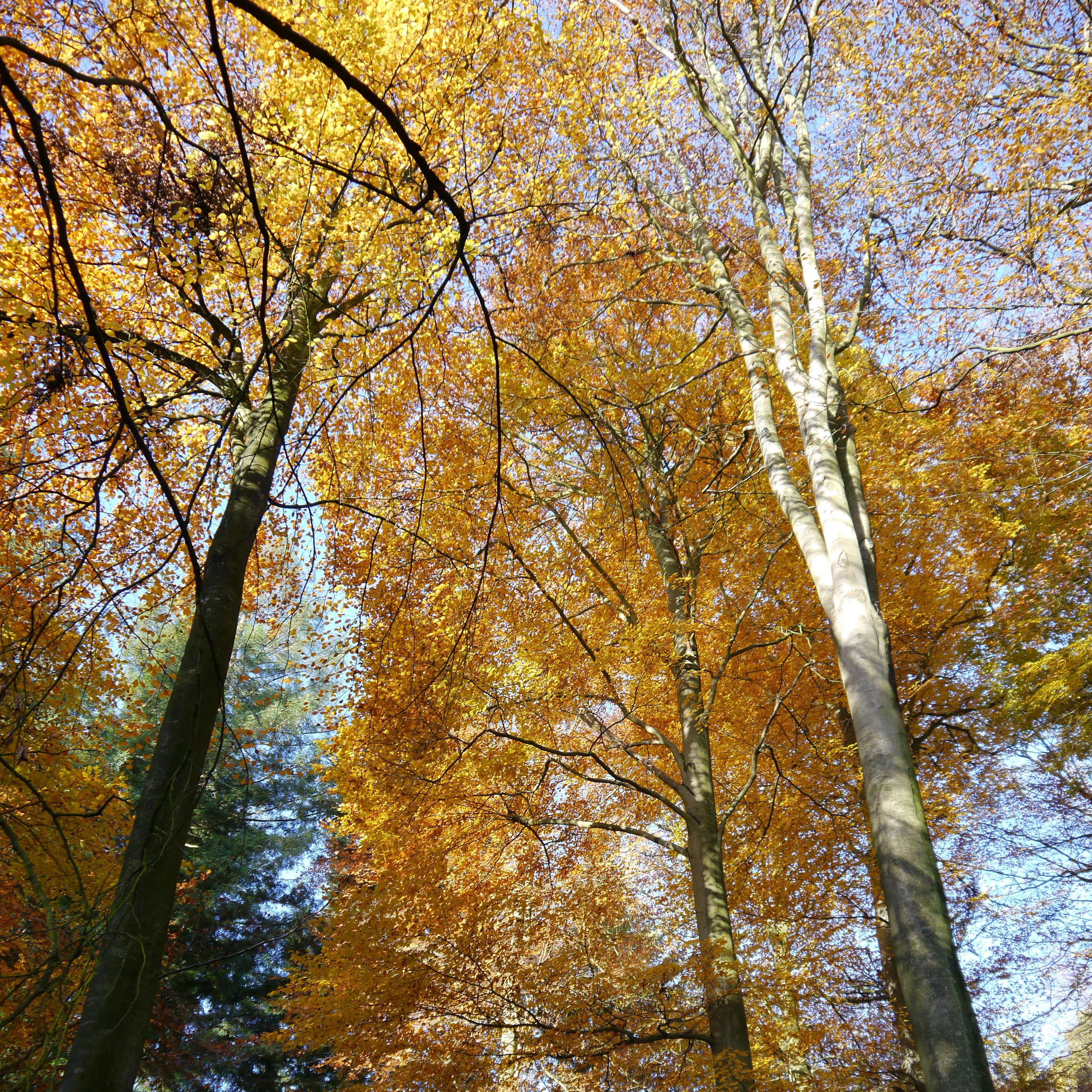 Autumn Chilterns 1