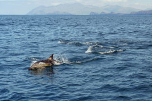 Dolphin with Dingle Penninsula