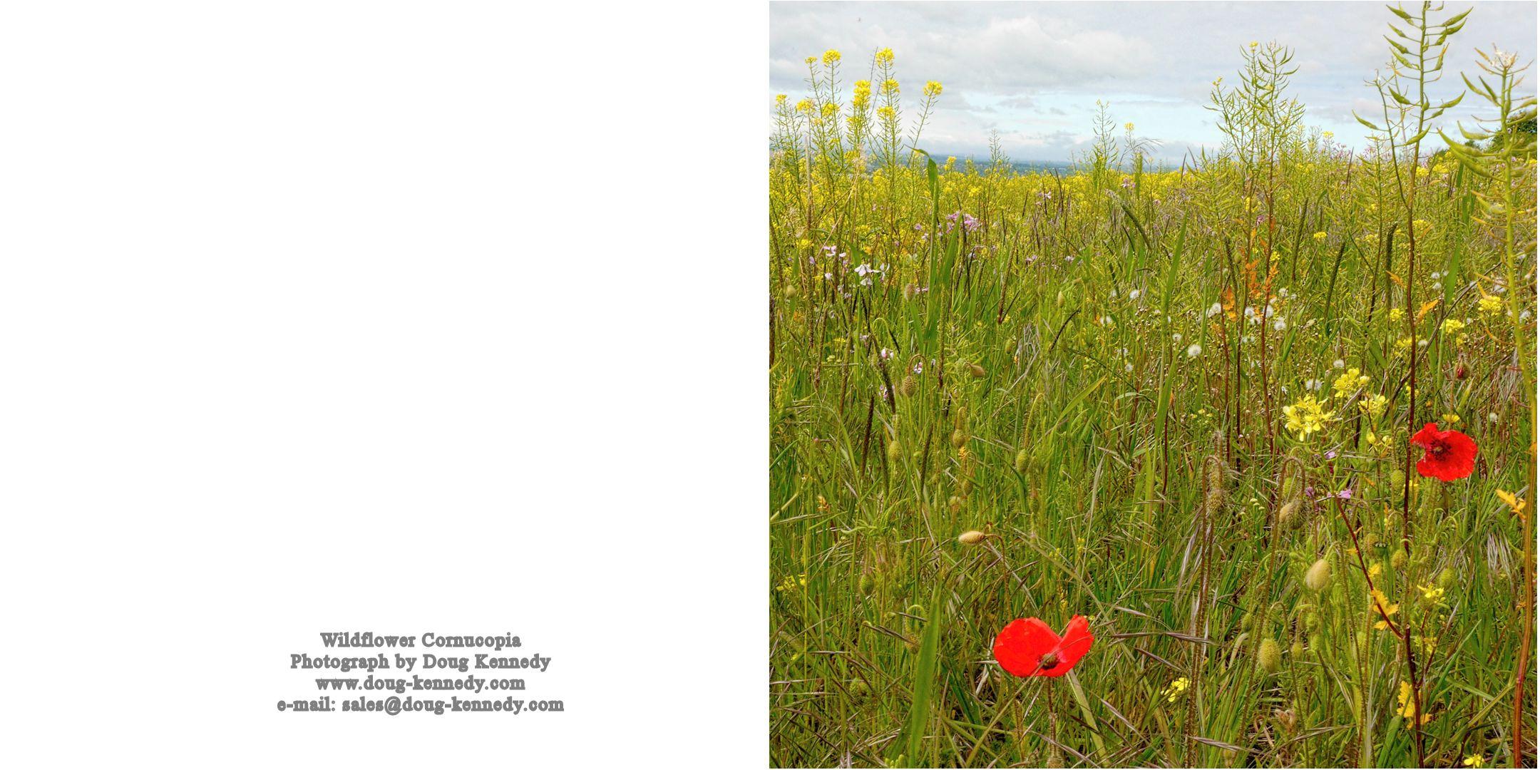 Wildflower Cornucopia 2